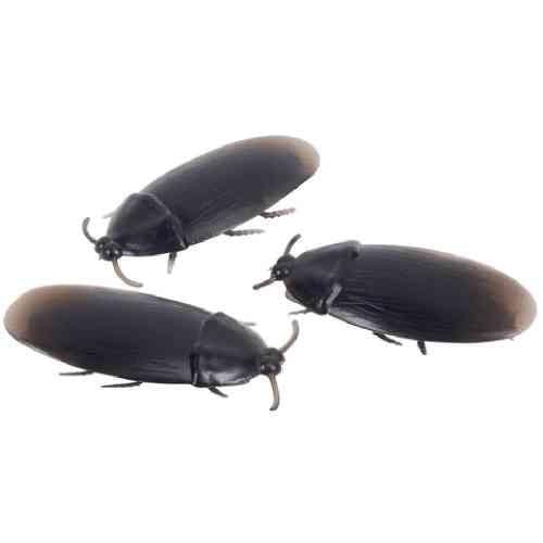 Fake Roaches Prank