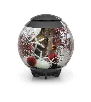 Aquarium with LED Light