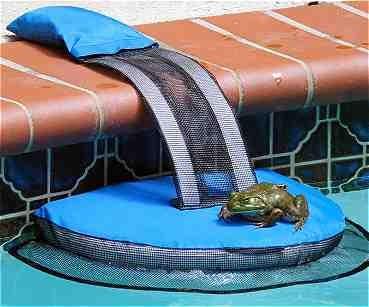 FrogLog Critter Saving Escape Ramp